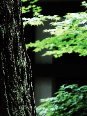 soku_19786.jpg :: 風景 自然 紅葉 寺社の紅葉 永平寺