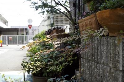 soku_19843.jpg :: 風景 街並み 都市の風景 住宅街