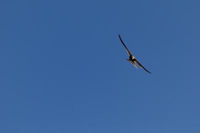 soku_19968.jpg :: 動物 鳥 燕 ツバメ
