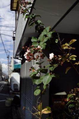 soku_20403.jpg :: 植物 樹木 庭木