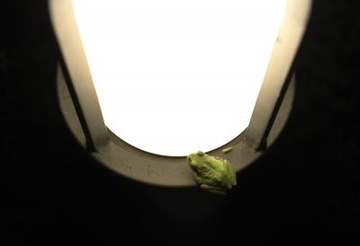soku_20432.jpg :: 夏の終わり 二人は仲良し 動物 爬虫類 両生類 カエル