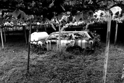 soku_20668.jpg :: 寂しい 乗り物 交通 自動車 廃車 モノクロ