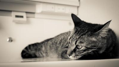 soku_20807.jpg :: あんこ 動物 哺乳類 猫 ネコ SMC PENTAX 28mmF3.5 スーパータクマー M.O