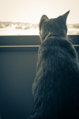 soku_20808.jpg :: あんこ 動物 哺乳類 猫 ネコ SMC PENTAX 28mmF3.5 スーパータクマー M.O