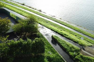 soku_20830.jpg :: 公園 河川敷緑地