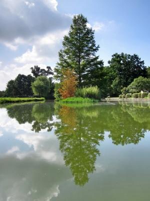 soku_20877.jpg :: PowerShotS95 風景 自然 水分 コンデジ埼玉 lock しのぶの池 空 雲 水城公園 HDR