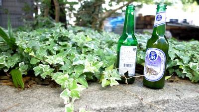 soku_20901.jpg :: 植物 草葉 ビン ガラスビン
