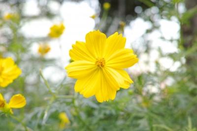 soku_20905.jpg :: 植物 花 黄色い花