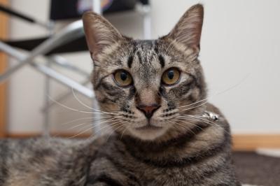 soku_20917.jpg :: あんこ 動物 哺乳類 猫 ネコ