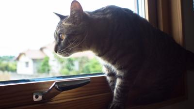 soku_20925.jpg :: あんこ 動物 哺乳類 猫 ネコ SMC PENTAX 28mmF3.5 スーパータクマー M.O