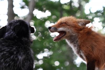 soku_21015.jpg :: 動物 哺乳類 犬 イヌ