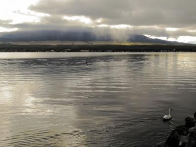 soku_21154.jpg :: PowerShotS95 風景 自然 水分 コンデジ埼玉 lock 湖 山中湖 動物 鳥 白鳥 ハクチョウ コブハクチョウ