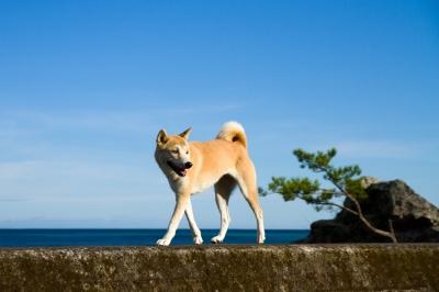 soku_21215.jpg :: 動物 哺乳類 犬 イヌ