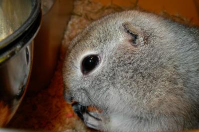 soku_21259.jpg :: リチャードソンジリス 動物 哺乳類 栗鼠 リス