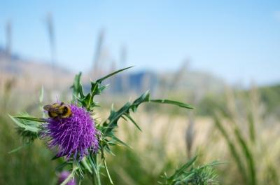 soku_21266.jpg :: 動物 虫 昆虫 蜂 ハチ