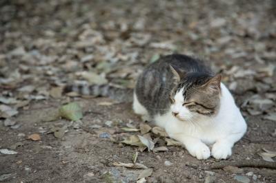 soku_21499.jpg :: 動物 哺乳類 猫 ネコ