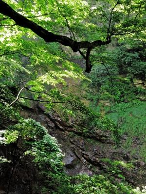soku_21511.jpg :: PowerShotS95 風景 自然 コンデジ埼玉 lock 葉 崖