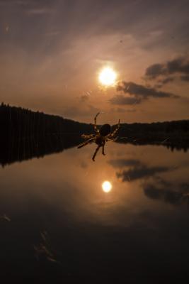 soku_21607.jpg :: 蜘蛛 太陽 川 水分少し 風景 自然 水面 水鏡