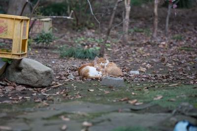 soku_21899.jpg :: 動物 哺乳類 猫 ネコ