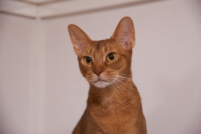soku_21921.jpg :: 動物 哺乳類 猫 ネコ 子猫