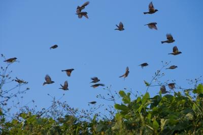 soku_21983.jpg :: 動物 鳥 野山の鳥