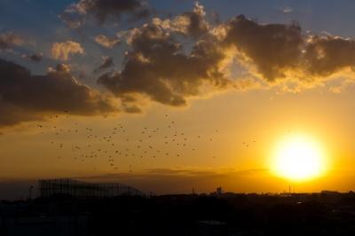 soku_21985.jpg :: 鳥 夕日 夕焼け 空 雲 風景
