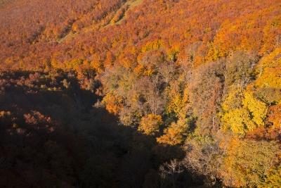 soku_22068.jpg :: 八甲田山 紅葉狩り 風景 自然 紅葉