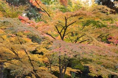 soku_22363.jpg :: 風景 自然 紅葉