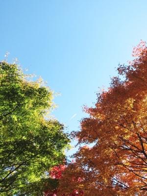 soku_22390.jpg :: PowerShotS95 風景 自然 コンデジ埼玉 lock 風景 自然 紅葉 赤い紅葉 空 飛行機雲
