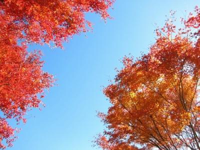 soku_22414.jpg :: PowerShotS95 風景 自然 コンデジ埼玉 lock 紅葉 赤い紅葉 八丁峠