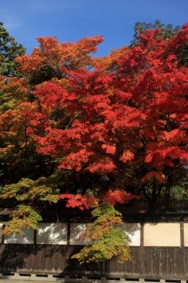 soku_22438.jpg :: 風景 自然 紅葉 青空 by Niigata