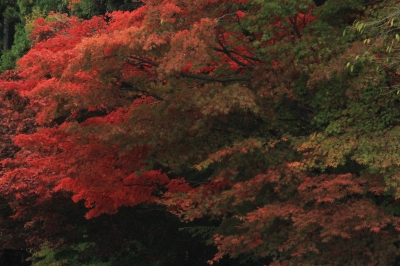 soku_22447.jpg :: 風景 自然 紅葉 by Niigata