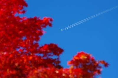 soku_22464.jpg :: 風景 自然 空 飛行機雲 紅葉