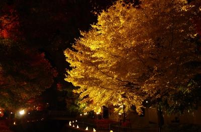 soku_22557.jpg :: ライトアップ