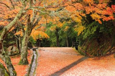 soku_22569.jpg :: 風景 自然 紅葉 赤い紅葉