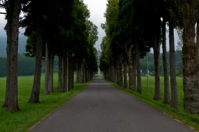 soku_22654.jpg :: 並木道 風景 トラピスト修道院