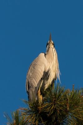 soku_22680.jpg :: 動物 鳥 野鳥 自然の鳥 未記入鳥