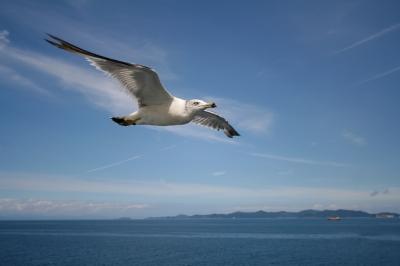soku_22802.jpg :: 鳥 カモメ 鴎 津軽海峡 (^-^)