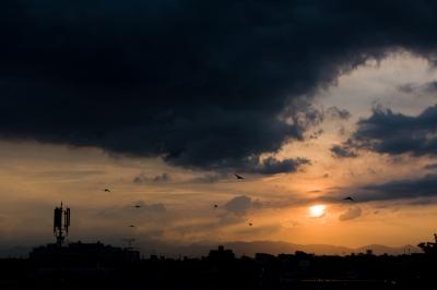 soku_22891.jpg :: 夕日 空 雲 鳥 風景