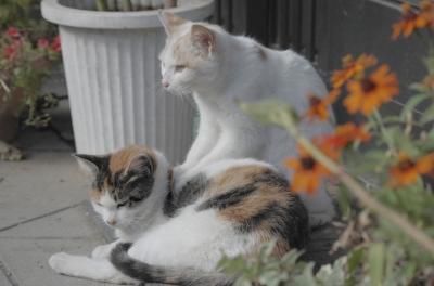 soku_22961.jpg :: 動物 哺乳類 猫 ネコ 子猫
