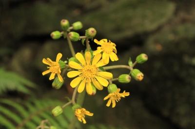 soku_23028.jpg :: 植物 花 黄色い花