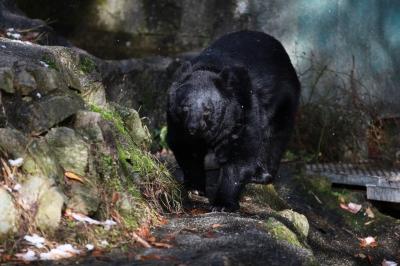 soku_23191.jpg :: 動物 哺乳類 熊 クマ