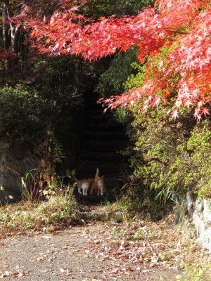 soku_23247.jpg :: PowerShotS95 風景 自然 コンデジ埼玉 lock 紅葉 赤い紅葉 動物 哺乳類 猫 ネコ アヌス(笑)