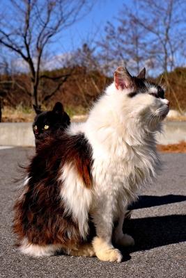 soku_23339.jpg :: 動物 哺乳類 猫 ネコ