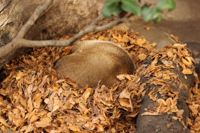 soku_23374.jpg :: 動物園 井の頭自然文化園