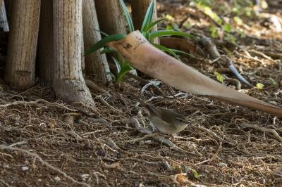 soku_23539.jpg :: 動物 鳥 野鳥 自然の鳥 未記入鳥