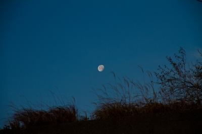 soku_23583.jpg :: 風景 自然 天体 月 元旦