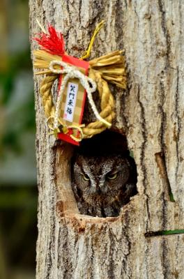 soku_23701.jpg :: 動物 鳥 掛川花鳥園 フクロウ