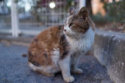 soku_23741.jpg :: 動物 哺乳類 猫 ネコ