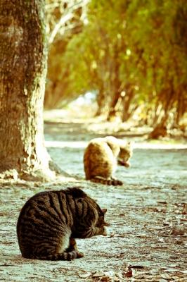 soku_23779.jpg :: 動物 哺乳類 猫 ネコ
